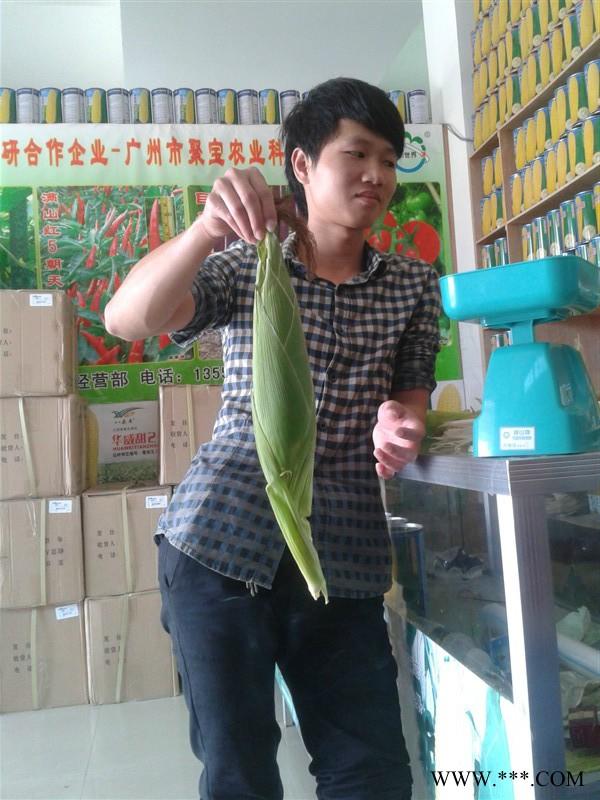 供应超甜玉米种(华金甜1号)