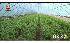 03:37 发展特色产业,推动乡村振兴,争创全国绿色农业示范区