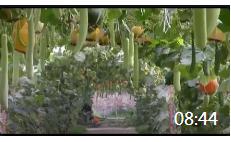 08:44 绿色农业的基础——腐植酸绿色生态肥