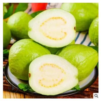 台湾白心珍珠芭乐5斤 应季新鲜孕妇水果清甜爽口 现摘水果 番石榴