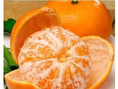 广西武鸣沃柑 橘子新鲜甜水果 新鲜应季水果非皇帝柑 桔子