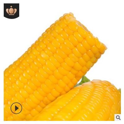 广西水果玉米棒230gX8袋甜玉米开袋即食厂家直供真空营养粗粮早餐