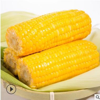 广西水果玉米棒鲜嫩甜玉米230g*6根基地厂家直批即食真空粗粮代餐