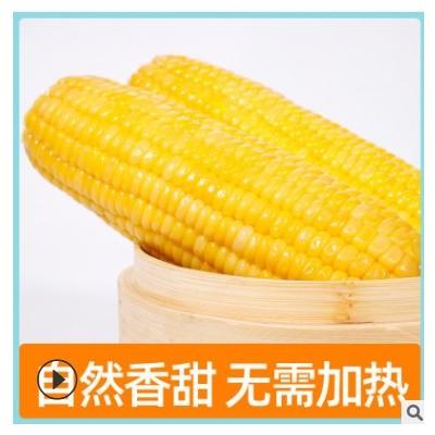 广西水果玉米真空即食甜玉米厂家直供代工贴牌方便营养代餐玉米棒