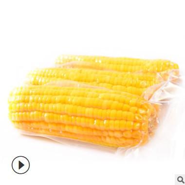 广西水果玉米 230gX8袋 甜玉米厂家直批开袋即食真空粗粮茶点代餐