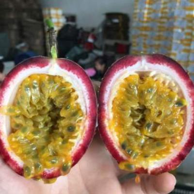 【百香果】百香果西番莲新鲜水果新鲜采摘鸡蛋果代发