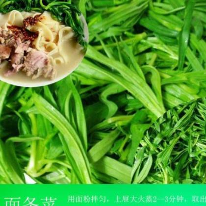 5斤包邮 信息面条菜现摘蔬菜时令柳叶菜当季柳叶棵代发包售后