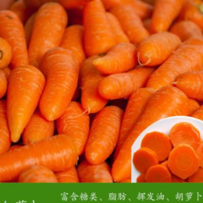 5斤装包邮 新鲜胡萝卜 现挖红萝卜可榨汁农家新鲜蔬菜(6个-15个)
