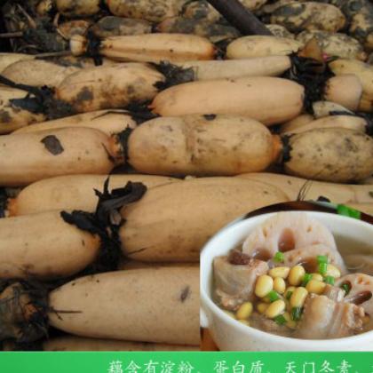 5斤包邮 新鲜莲藕现挖粉藕带泥嫩藕营养面藕荷藕茎时令蔬菜包售后
