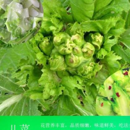 5斤包邮 新鲜儿菜现摘绿色儿菜嫩娃娃菜母时令蔬菜泡菜原料包售后