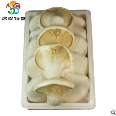 新鲜白灵菇长寿海鲜食用菌蘑菇酒店餐厅煲汤蔬菜火锅小炒菜新品