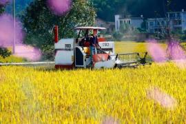 """农业补贴政策,要优先支持""""多种粮食的人""""定向发力"""