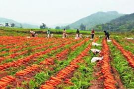 农村未来农业的三大变化