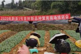为乡村振兴提供科技和人才支撑——省现代农业产业技术体系、基层农技推广体系合力打造试验示范基地