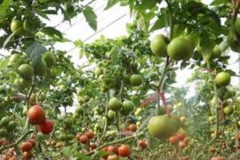 夏津农业发展新亮点 八大目标来了!