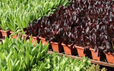 生产速冻蔬菜和速