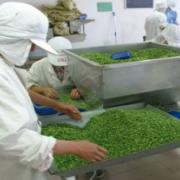 宁夏灵武市万银蔬菜食品有限公司