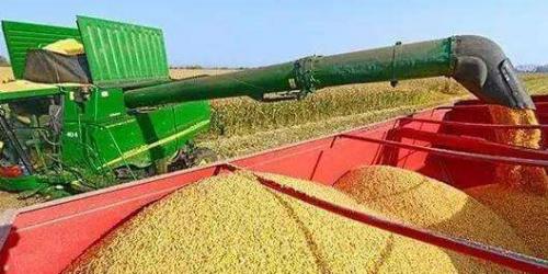 农业农村部:中国有能力端牢自己的饭碗(附全文)