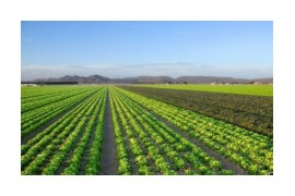政策利好刺激农业板块逆市上扬 券商看好种植、养殖产业链