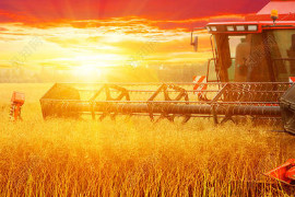 河北固安:特色农业拓宽致富路