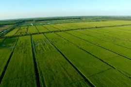 全产业链农业是乡村振兴必答题