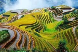 """盐城大丰:""""超级农场""""书写现代农业发展新篇章"""
