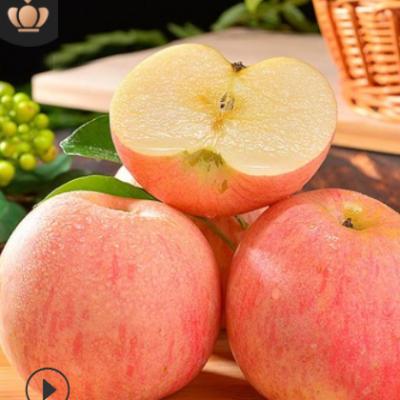 顺丰新鲜红富士苹果批发10山西应季脆甜孕妇糖心苹果生鲜水果代发