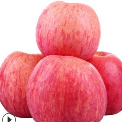 陕西新鲜洛川红富士苹果 5斤10斤高山纸袋脆甜孕妇水果整箱批发