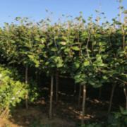 浏阳市柏诚苗木种植专业合作社