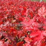 江苏博之星园林绿化工程有限公司