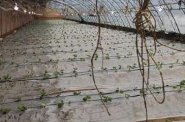 甘泉县设施蔬菜冬季管理技术要点