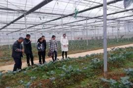 清镇:如何定位农业园区主导产业?省农科院园艺所花卉团队专家来支招
