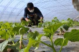 雨水时节 蔬菜生产栽培忙