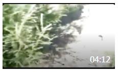 04:12 赫哲人农副产品专业合作社——乌鸡养殖视频