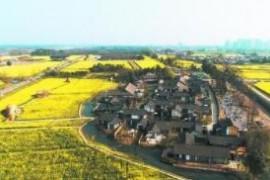 武清区加快发展现代种业助力农业供给侧改革