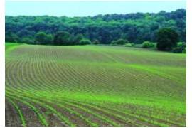 红安:动态监督农业项目 全力护航乡村振兴