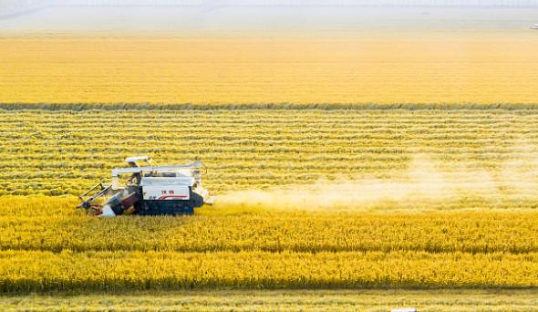 达州推动特色农业产业发展综述