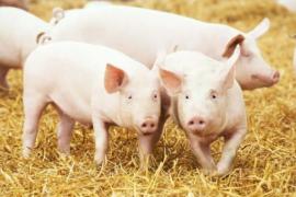 农业农村部答复:支持散养户发展的建议!加强散养户用地保障