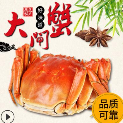 大闸蟹螃蟹生鲜大闸蟹 鲜活熟食加热即食大闸蟹 海鲜批发
