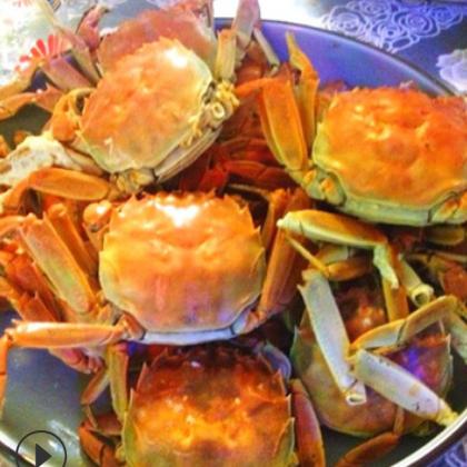 螃蟹礼盒3.5母5只+5公5只 批发鲜活螃蟹提货 量大优惠