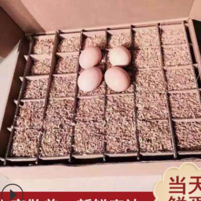 (一箱60枚)新鲜农家土鸡蛋 农家散养草鸡蛋批发直供