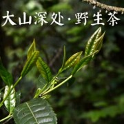 安化县老邓家茶号