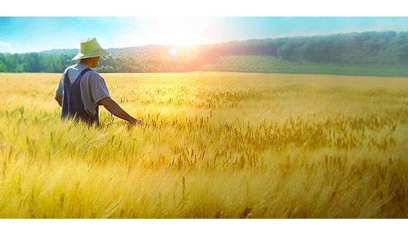 农业类高校,2021最新排名,农田里的浪漫,你感兴趣吗?