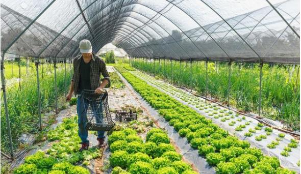 如果做好新农业发展