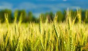 """瓜州:""""绿色有机""""生产引领农业质效提升"""