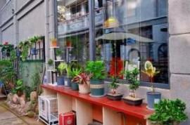 文成县举办美丽庭院园艺与蜜源植物种植培训班