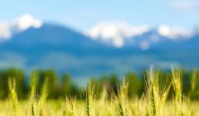 州农业综合行政执法支队组织开展全州经营禁限用农药以及农药包装废弃物回收专项执法检查