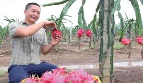 湛江农垦:智慧农业开启新视野