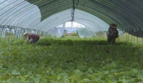 南昌县:农业向品牌化发展
