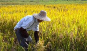 国家出手,让种地不犯难,农业农村部新规指出亿万农户的新机遇